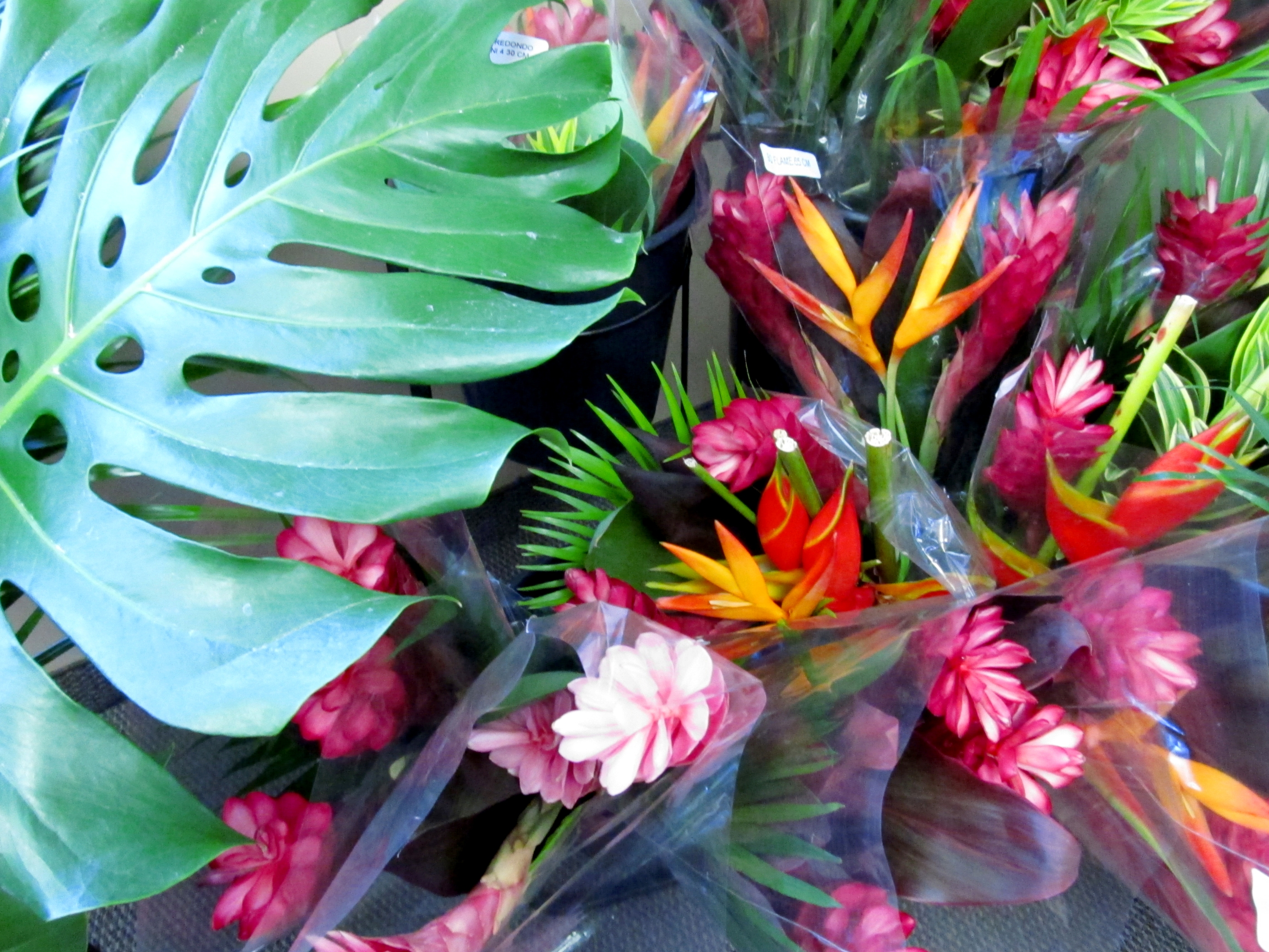 plein feux sur les bouquets exotiques sierra flower finder. Black Bedroom Furniture Sets. Home Design Ideas