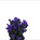Aster Obelix Purple