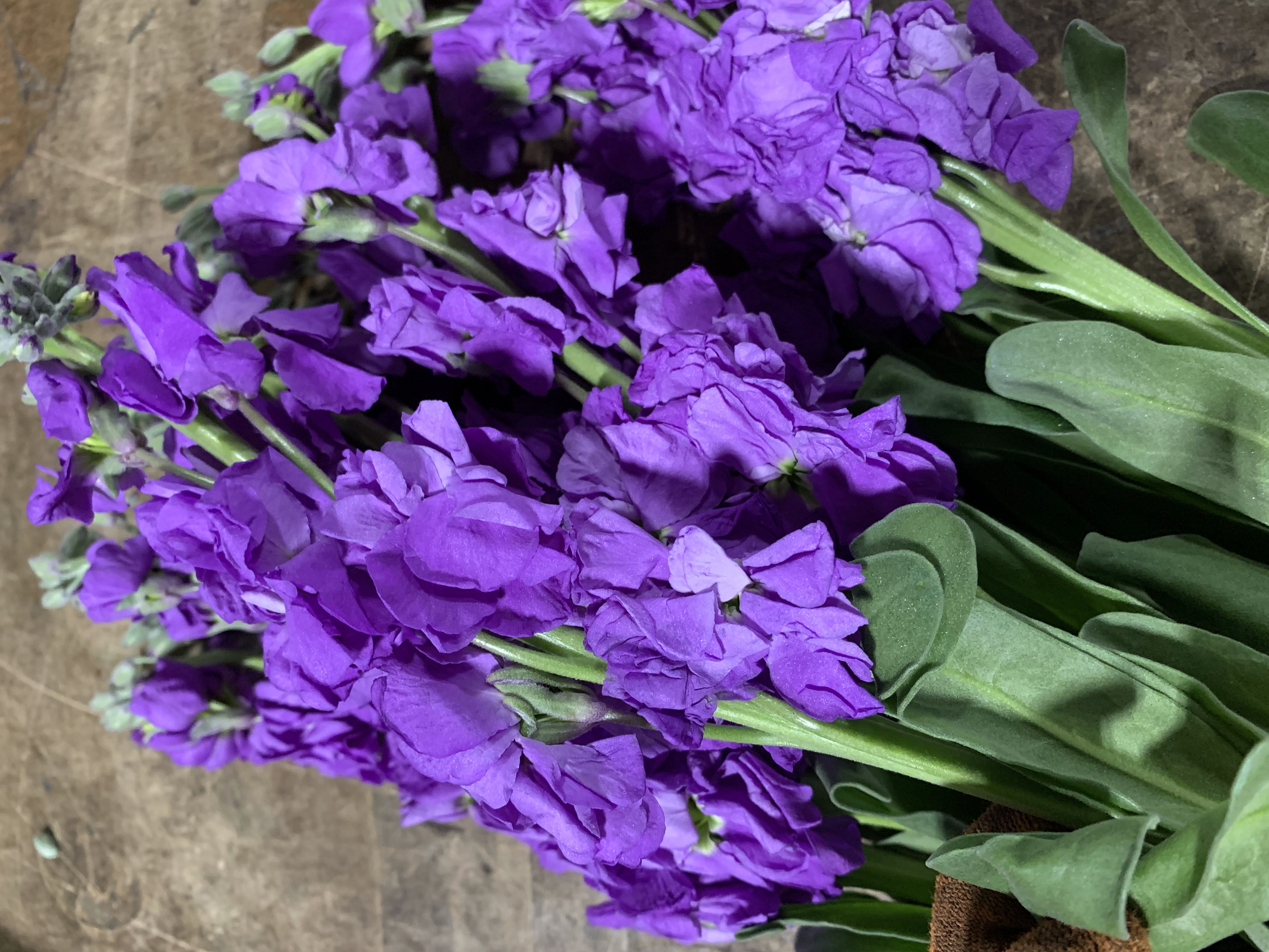 purple  double stock  flowers and fillers  flowers by category, Beautiful flower