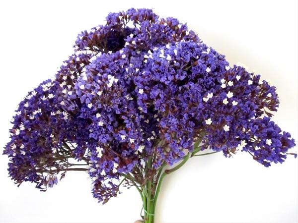 added by SierraStatice Flower