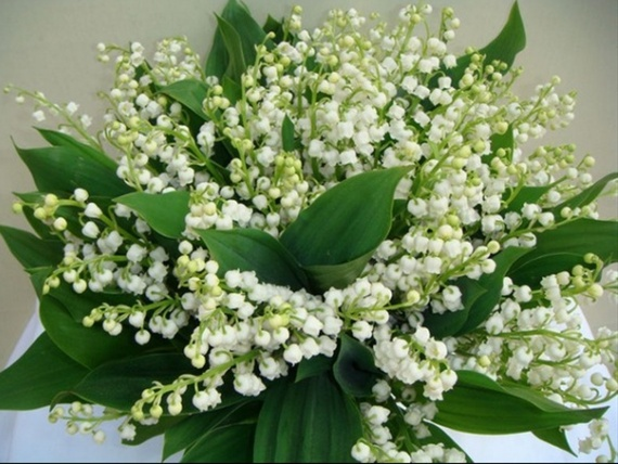 lily of the valley muguet fleurs fleurs par cat gorie sierra flower finder. Black Bedroom Furniture Sets. Home Design Ideas