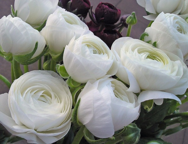 White shades ranunculus flowers and fillers flowers by added by sierra mightylinksfo