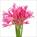 Pink Nerine