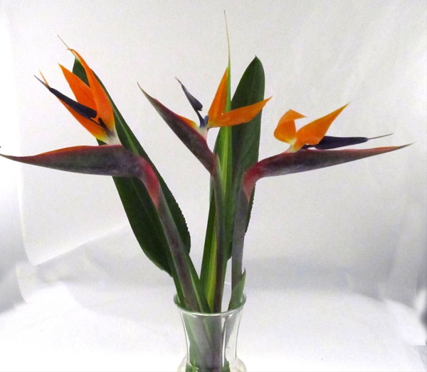 BQ 3 Birds of Paradise - Tropical Bouquets - Exotic Blooms and ...