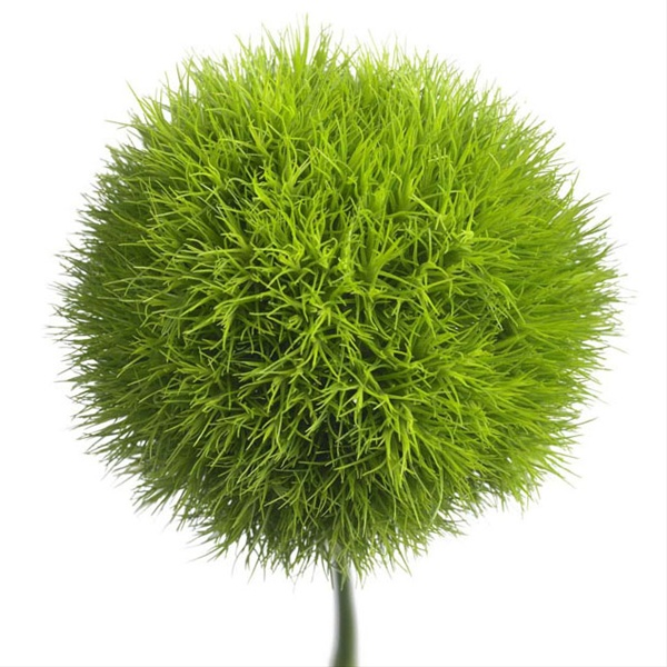 green ball  dianthus  flowers and fillers  flowers by category, Beautiful flower