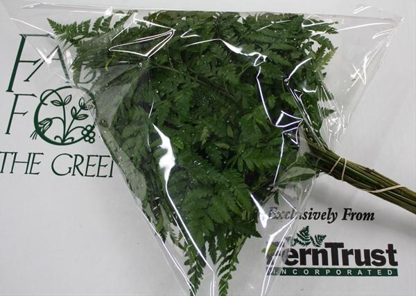 nike roshe run grises - Leather Leaf Large Delta Sleeved - Florida Greens - Greens ...