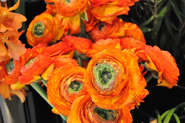 Green center orange ranunculus flowers and fillers flowers by grower and breeder information mightylinksfo