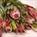 Bouquet Protea 3 stem