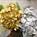 Hydrangea Metallic & Glitter