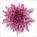 Cremon Pink Golosina