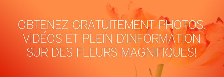 Abonnez-vous à nos bulletins floraux