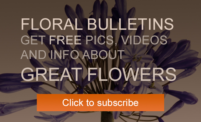 Subscribe to our floral bulletins
