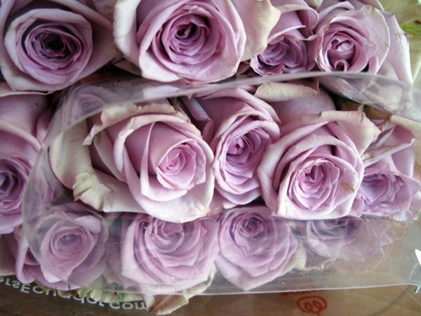 Avant Garde Standard Rose Roses Flowers By Category Sierra