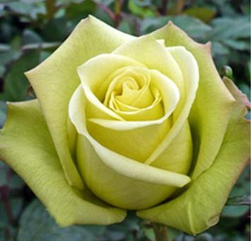 Jade Rose nude 242