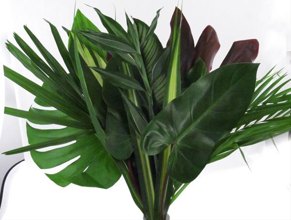 bq tropical foliage speciality large feuillage tropical fleurs et feuillages exotiques. Black Bedroom Furniture Sets. Home Design Ideas