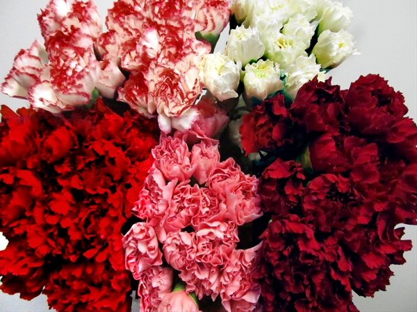 a6737e7d0954 Assorted Christmas or Valentines Mix - Standard Carnation ...