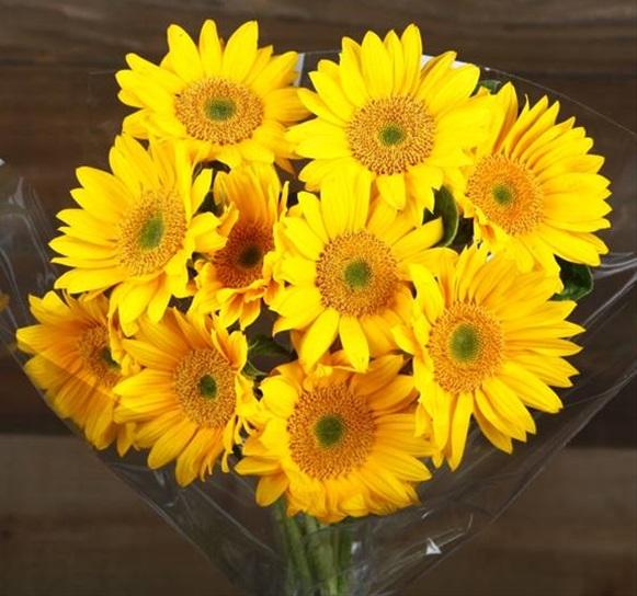 Mini Sunflower Sunbeam - Sunflowers - Flowers and Fillers ...